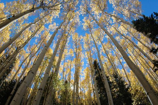 Telluride, CO: the aspens