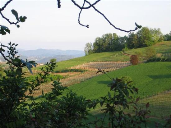 Acqui Terme, Italy: Vineyard views from the Baur patio