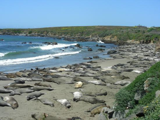 Piedras Blancas San Simeon Ca Address Phone Number