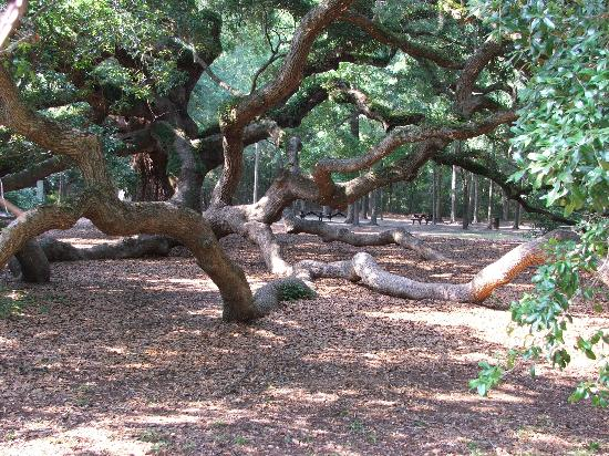North Charleston, Caroline du Sud : 1400 year old Angel Oak