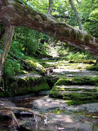 Lexington, KY: Creek (low on July 2) near Grist Mill on white trail off red loop between K and L markers.