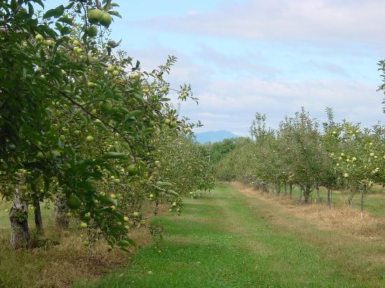 Hudson, État de New York : Look at all those apple trees.