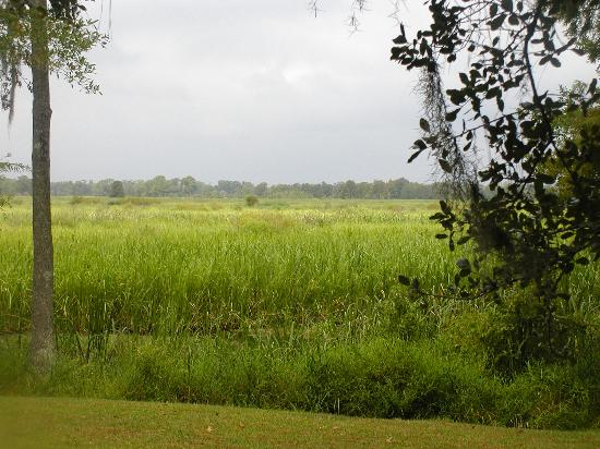 Litchfield Plantation: rice marsh at rear of property