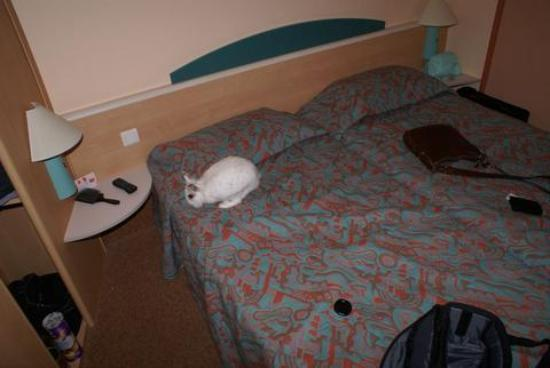Ibis Arles: Dylan the rabbit checks his holiday room out