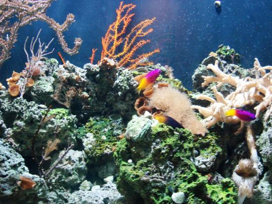 Coupons For Aquarium Of The Pacific 2017 2018 Best