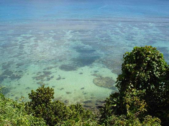 Taveuni Island Resort & Spa: View of our the coral below our bure