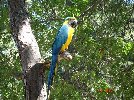 Yarmouth Country Cabins: Buster the resident parrot
