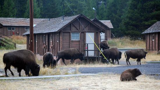 ... Picture of Lake Lodge Cabins, Yellowstone National Park - TripAdvisor