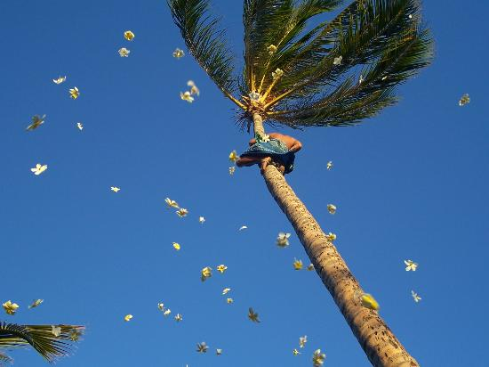 Kapolei, HI: Flower Shower