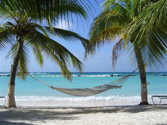 Hammock On The Renaissance Private Island Beach Picture