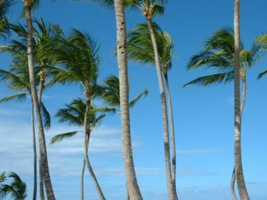 Punta Cana, Den dominikanske republikk: Palm trees