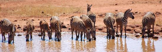 Tsavo National Park West