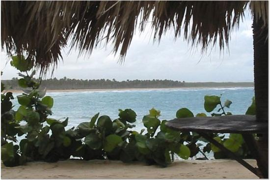 Punta Cana, Republik Dominika: Local Beach-1