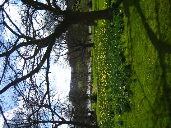 Stamford, UK : South gardens daffodils