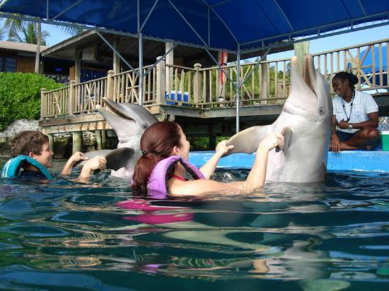 http://media-cdn.tripadvisor.com/media/photo-s/00/18/06/c2/dolphin-dance.jpg