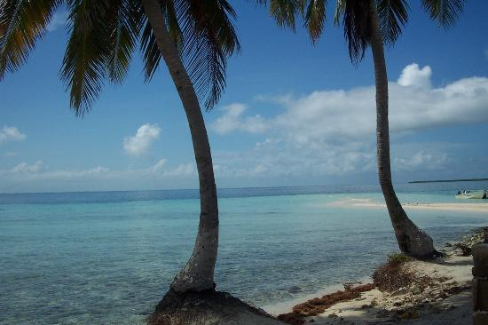 Belize Cayes, Belize: What a view!  Goffe's Caye