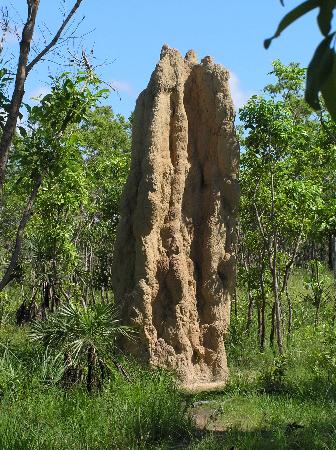 Giant termite mounds in Litchfield National Park