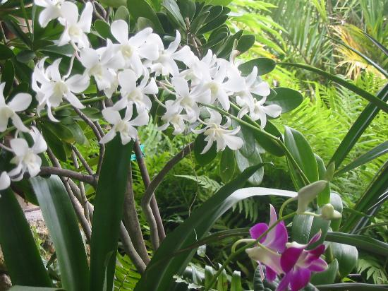 Vero Beach, FL: A nice closeup of some orchids