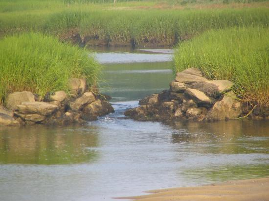 Barnstable, MA: Marsh across the street