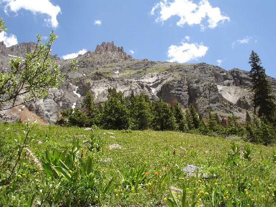 Ouray, Колорадо: A few of the wildflowers at the basin