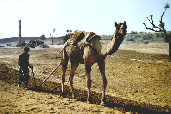 Rajasthan Picture