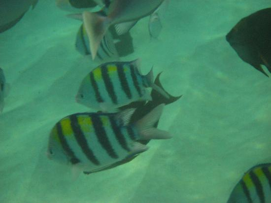 Tropical fish swimming near Black Rock