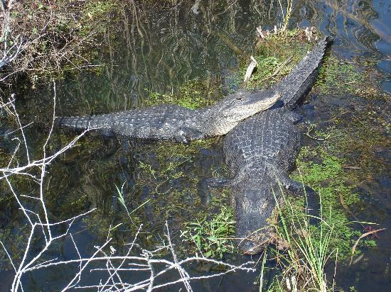 Everglades National Park. All-very-cosy