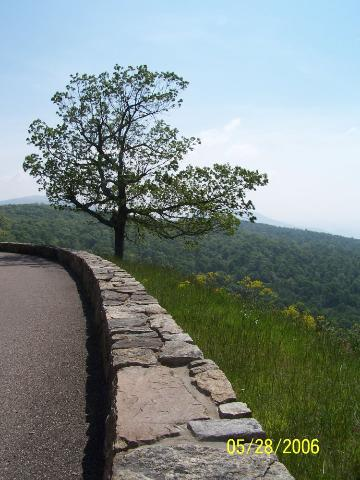 A Skyline Drive eastside overlook (looking north)