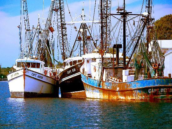 Tarpon Springs, FL: Old sponge boats at docks