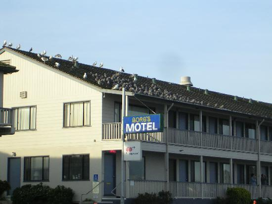 Borg's Ocean Front Motel: View of the front of the motel (seagulls on the roof)
