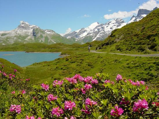 http://media-cdn.tripadvisor.com/media/photo-s/00/19/fe/1a/melchsee-frutt-near-lucerne.jpg