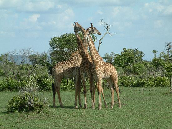 Tsavo National Park East attractions