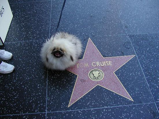 West Hollywood, CA: dusty enjoying hollywood and his favorite star!