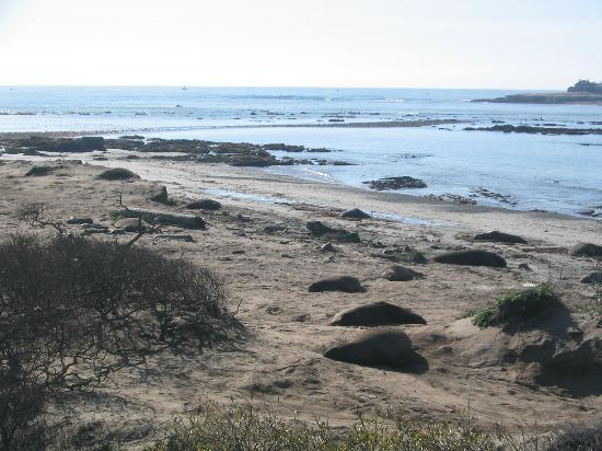 Pescadero, Californien: Seals everywhere!!