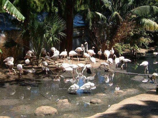 Cape Town Central, South Africa: world of birds - hout bay