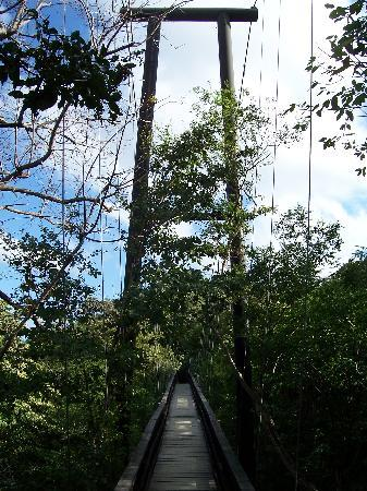 Morgan's Rock Hacienda and Ecolodge: Bridge through the forest