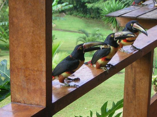 La Rana de Arenal: More Tucan&#39;s!