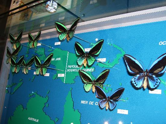 Montreal, Canada: Australian butterflies