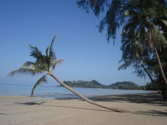 Ko Chang, Thailandia: Same palm tree, different angle, nice & quiet here
