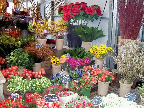 Flower Show in Amsterdam http://www.tripadvisor.it/ShowUserReviews-g188590-d190207-r120412338-Flower_Market-Amsterdam_North_Holland_Province.html