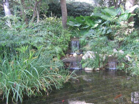 Koi pond in exotic garden of monte carlo picture of for Boulevard du jardin exotique