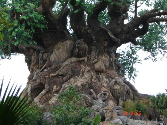 Tree Of Life 2 Picture Of Disney S Animal Kingdom