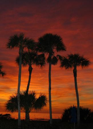 Longboat Key Club &amp; Resort: Just another sunset on Longboat Key