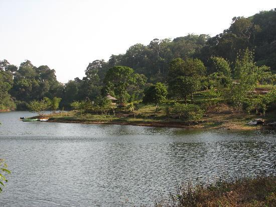 Thekkady, Indie: Lush jungle and wildlife - tiger reserve