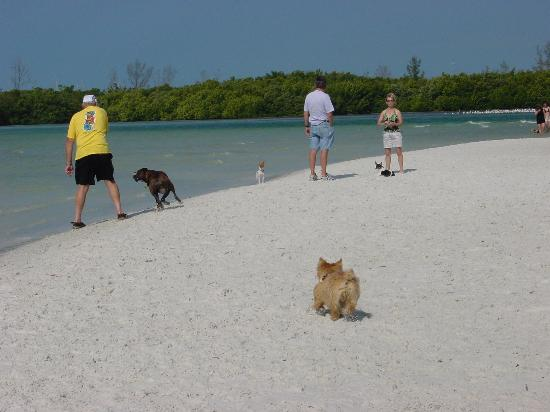 Bonita Springs, FL: Dog Beach scene