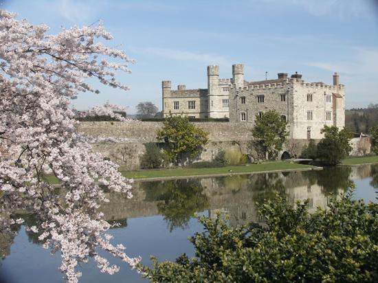 , UK: Leeds Castle looking through Cherry Blossom