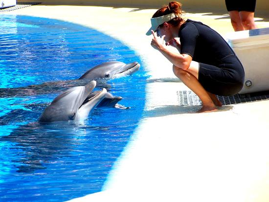 Dolphin training facility at Secret Garden at the Mirage - Picture of Las Vegas, Nevada