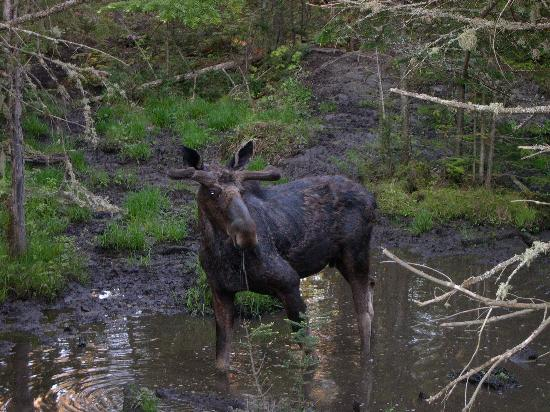 The Glen: Muddy Moose