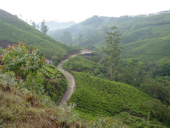 Kochi (Cochin), India: Tea Plantations, Munnar