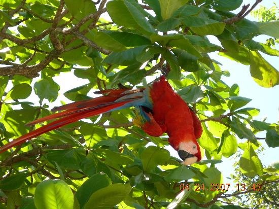 Hanging From a Tree Upside Down Macaw Hanging Upside Down